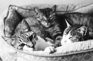 These cats are so dang adorable.