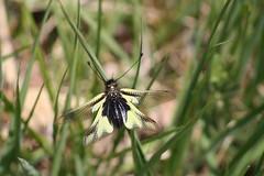 Un volo sfuocato (diemmarig) Tags: sentierodelluisin libelluloide