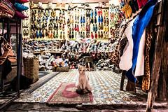 The cat of the bazaar (superUbO) Tags: marrakech cat bazaar suk marocco street color portrait eyes look carpet shoes market shop old city