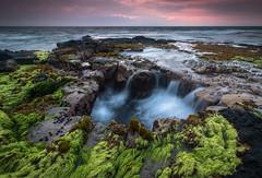 Limu Bloom (Tom Yessis) Tags: seascape sky sunset sea water waves waterfall wave wideangle landscape longexposure lava clouds color canon canonphotography ocean beach hawaii bigisland island glow nature kona konasunset
