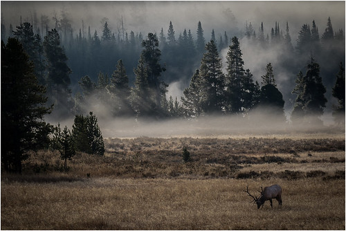 Elk Meadow - by Ron Szymczak