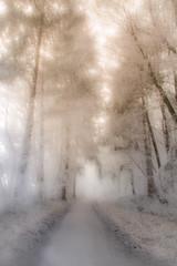 Retour sur Décembre... Return to December... (montier_isabelle) Tags: winter wood forest white cold quiet france
