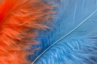 Coloured Fluff [Explored]