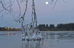Ice and moon (Anders_3) Tags: hålandsvatnet randaberg rogaland norge norway lake ice moon reflection bokeh tree branches nikon d700 winter 7s49487v3