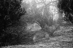 Depth of Memories (JamieHaugh) Tags: bath somerset england beckford sony a6000 blackandwhite blackwhite monochrome outdoors bw cemetery graves trees depth memories lansdown