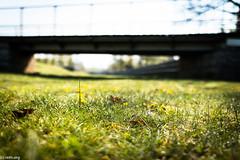 (der-kruemel) Tags: 1835 1835mm 70d bridge brücke canon canoneos70d eos flora frankfurt frankfurtammain gräser grün rebstockpark sigma sigma1835mm sigma1835mmf18 sigma1835mmf18dchsm wiese
