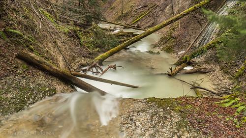 wild nature-Feldbach Wattwil 6.)-1269