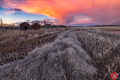 You know it's spring when... 4 (Kasia Sokulska (KasiaBasic)) Tags: fujix canada alberta rural spring landscape clouds sky sunset fields oldfarm