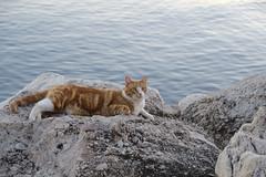 lindo gatito (alfonsovalgar) Tags: playa paseo marítimo torremolinos fujifilm xt2