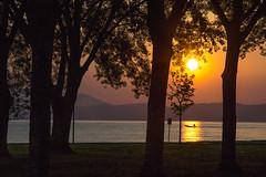 early fisherman (phacelias) Tags: trees bomen sunrise zonsopkomst alba earlymorning vroegeochtend lamattinapresto
