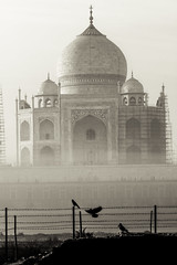 Morning Visitors - Agra, India (Kartik Kumar S) Tags: tajmahal taj agra uttarpradesh mehtab bagh sunrise clouds colors borders fences canon 600d tokina 1116mm sunset people architecture monument