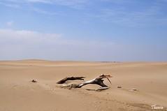 Punta del Fangar (Gatodidi) Tags: punta fangar deltadelebre deltebre tarragona catalunya cataluña spain españa paisaje mar paisatje cielo nubes azul agua rocas sunsets atardecer playa arena landscape nikon d90 dunas faro bassadelaalfacada sunset banya riumar