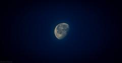 Blue Night (Rasheed Sameed) Tags: saudiarabia canon 600d eos night moon sky