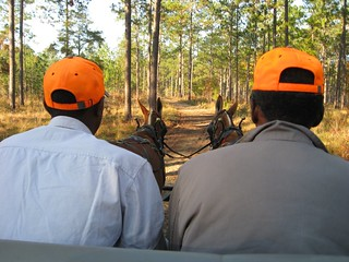 Georgia Mule Drawn Quail Hunt 22