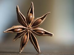 Macro Mondays - Member's Choice: Seeds [Explored] (cuppyuppycake) Tags: macro monday hmm macromondays memebers choice seeds memberschoice star anise one nikon d7200 macrounlimited