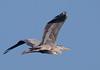 Rondini - Swallow (sguegl) Tags: rondine swallow bird tamron 150600 g2 canon 5d iv