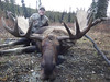 Alaska Dall Sheep Hunt & Moose Hunt 25