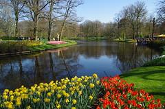 Keukenhof Hollande 04 2017 (jlfaurie) Tags: keukenhof holland hollande holanda fleur flower flor primavera spring printemps tulipes tulips tulipanes park parque mechas gladys jlfr jlfaurie michel 042017