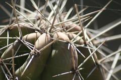 Colomos Forest photos - cactus (Mister Molacho) Tags: macrophotography macro canon 70300 sigmalenses méxico mrmolacho