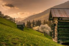 Frühling in den Bergen (maka3110) Tags: hobby landschaft sigma1770 nikon flickr explorer gipfel grass grün frühling goldene stunde sonnenuntergang stadel berge bäume wiese blumen wolken himmel tirol fliess niedergallmig österreich alpen