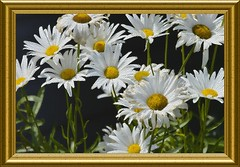 A picture Made Of Tiles (swong95765) Tags: tiles flowers frame picture gold hexagon unique different digital art