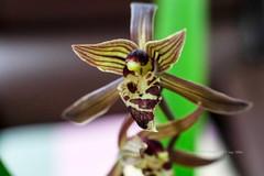 난초 orchid (Daegeon Shin) Tags: orquídea 난초 orchid fujifilm xpro2 takumar supertakumar 50mmf14 mf manualfocus macro macroadaptor flor flower mirrorless 후지 타쿠마 수동 수동렌즈 마크로 접사 접사링 꽃 dof 심도
