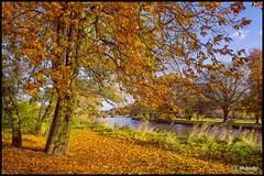 Burton Upon Trent-030 (John@photosuite) Tags: rivertrent burtonupontrent water river bankside staffordshire nikon uk landscape riverside breweries abbey autumn fallenleaves fall