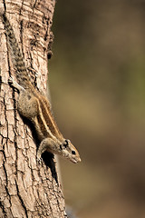 TIG171275GBw (giles.breton) Tags: andyrouse ranthambhorenationalpark india dickysingh