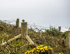 DSC_0226 (shieladixon) Tags: walking nature unspoiled coast bluesky wales coastal path welsh
