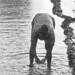 Found Photo - India - Water - bathing.tif