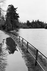 Reflective Ness (Donald Beaton) Tags: uk scotland highlands escocia schottland inverness river ness reflection puddle trees fence black white monochrome canon ae1 fd 50mm prime film 35mm ilford delta hp5 400