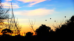 Winter Solstice Sunrise 2013 (with Hot Air Balloons) (Sparkey Davis) Tags: morning blue trees winter sky ora