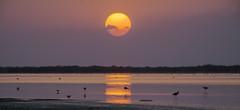 Chanisar Lake #5 (foto_morgana) Tags: sunset sun india nature birds asia scenic panoramic gujarat zainabad littleran chanisarlake