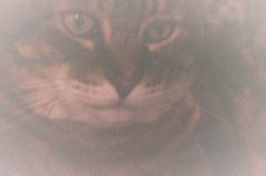 Jasper's Close-Up (Anne Abscission) Tags: summer pet water animal cat 35mm jasper pentax kitty naturallight expired summersend everett 400asa kodakgold pixiebob pentaxzoom90wr