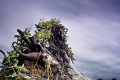 tree stump (Matt Jones (Krasang)) Tags: tree clouds thailand olympus stump nd grad omd cokin em5