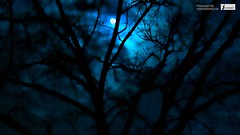 Beautiful dark scenery moon in forest wallpaper (Infoway LLC - Website Development Company) Tags: wallpaper beautiful wonderful nice superb awesome images exotic hd illustrator incredible breathtaking classy bambooforest mindblowing dryforest amazonrainforest greenforest winterforest woodforest junglewallpaper sunsetwallpaper islandwallpaper summerforest responsivewebsitedesign subtropicalforestwallpaper waterfallintropicalforest beautifuldarkscenerymooninforestwallpaper responsivewebdesigncompany mountainsnowforest yellowredautumnforest tropicaldesertisland tropicalforestwithriver