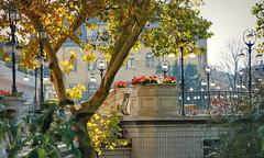 Terrace in October sun (elinor04) Tags: city autumn light sun house building t