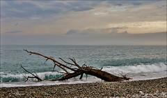 sulla spiaggia di renà  ... (miriam ulivi) Tags: nuvole mare liguria natura sassi rivieradilevante nikond3200 abigfave troncodalbero spiaggiadirenà rivarrigoso