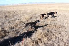 "BRW Field Day - Kenai, Benelli, Roxie • <a style=""font-size:0.8em;"" href=""http://www.flickr.com/photos/66999112@N00/11201472353/"" target=""_blank"">View on Flickr</a>"