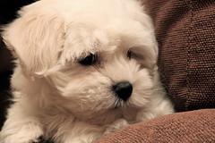 IMG_5605 (Pedro Montesinos Nieto) Tags: dog perro animales fragile mascotas frágiles