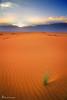 sunset desert .. (mzna al.khaled) Tags: yellow canon landscape sand desert saudi natrue طبيعة صحراء رمال 60d لاندسكيب tokina1116 mzna flickrandroidapp:filter=none