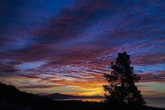 2014_01_07_sunrise_67z (dsearls) Tags: ocean tree santabarbara pine sunrise pacific pacificocean rinconmountain 20140107 santamonicamountainsviewblueeastpinkorangecloudscontrailschemtrailssilhouettepine