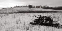 Poplar Creek Prairie, Cook County, Illinois (mastodont) Tags: winter snow cold january prairie kame cookcountyforestpreserves illinoisnaturepreserve poplarcreekprairie shoefactoryroadprairie