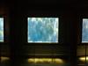 ] [] [ (Aviones Plateados) Tags: barcelona windows zoo aquarium ventanas finestres acuari lamanoamiga