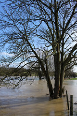 Soggy Tree (cazphoto.co.uk) Tags: trees water fields floods floodwater riverchelmer canoneos100d broomfieldmill canon1855mmeff3556isstm