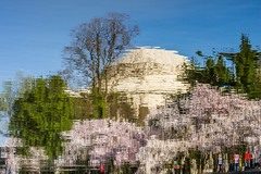 Reflecting D.C. Cherry Blossom Festival_ (4myrrh1) Tags: pink blue color reflection canon reflections cherry rebel washingtondc washington colorful blossom bloom cherryblossom t3i tidalbasin cherryblossomfestival ef24105l