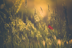 A stop along the way... (cristina.g216) Tags: butterfly grass flare sunflare mariposa hierba vegetación rojo red green verde