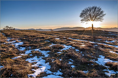 "Tramonto sulla ""terrazza"" di Canfaito (Luigi Alesi) Tags: italia italy marche macerata san severino riserva naturale del monte vicino e canfaito paesaggio landscape scenery tramonto sunset albero solitario alone tree inverno winter neve snow luce light natura nature nikon d750 raw"