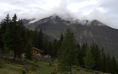 13-IMG_8420 (hemingwayfoto) Tags: österreich alm alpen austria baum europa fichte gainschnigghütte hütte hohetauern landschaft nationalpark natur rauris rauriserurwald reise tannenbaum urwald wald