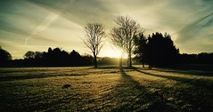 Frozen Warnings. (elam2010) Tags: golfcourse wirral winter shadows light lines trees intothesun silhouettes wintry landscape dawn sunrise sky frost sony a7 zeiss